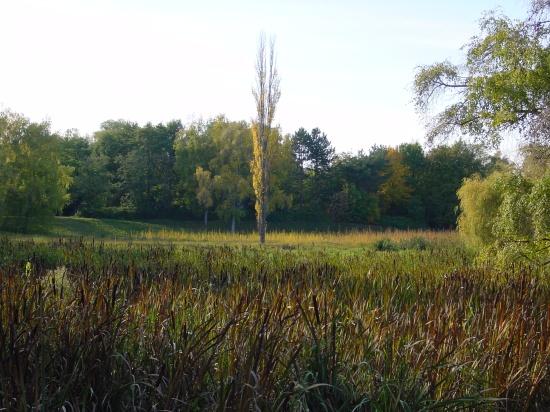 Herrenholzbecken im Oktober